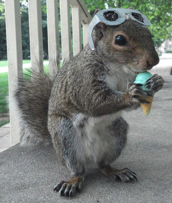 ice cream shades squirrel