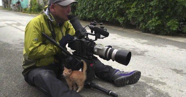 kitten-two
