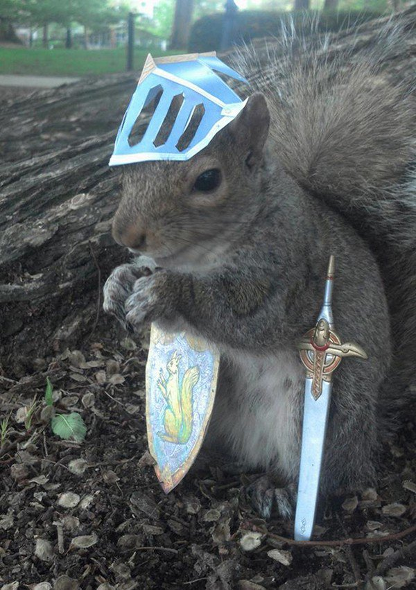 knight squirrel