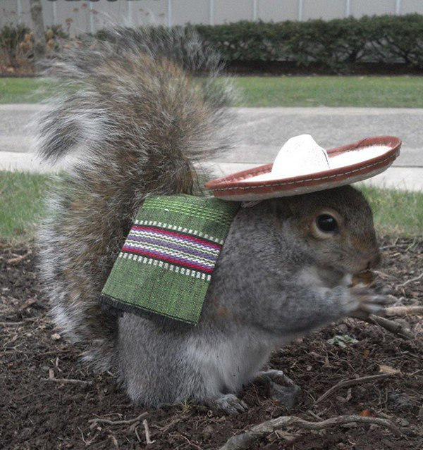 mexican squirrel