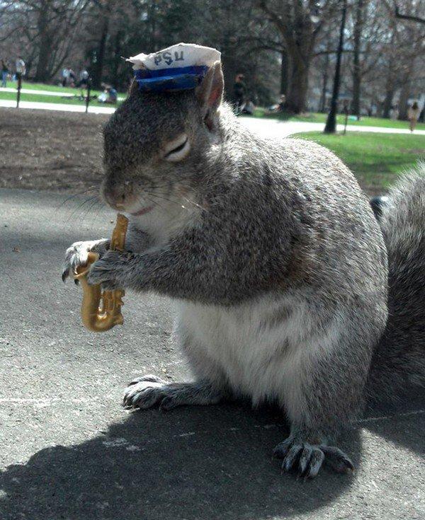 musician squirrel