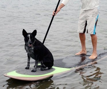 paddleboard traction pad for dogs