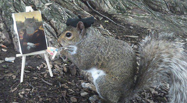 painter squirrel