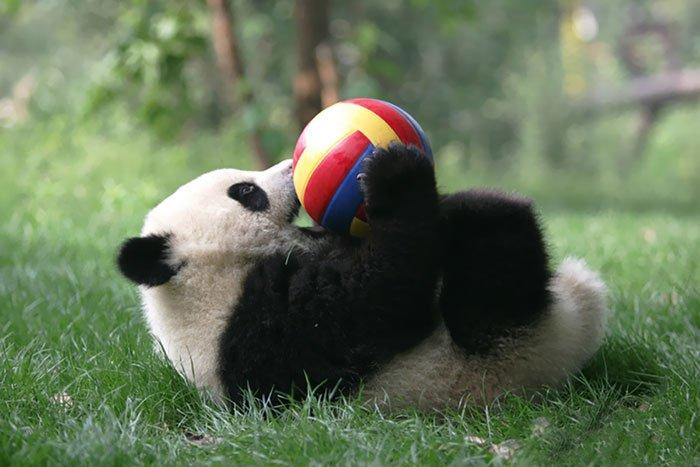 panda-balls