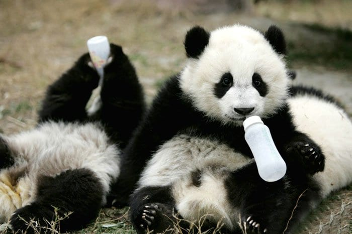 panda-bottles