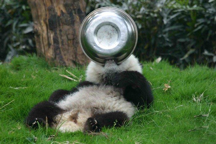 panda-bowls