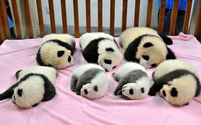 panda-day-care
