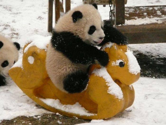 panda-playing