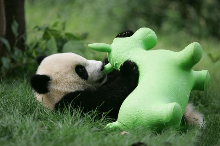 panda-toys