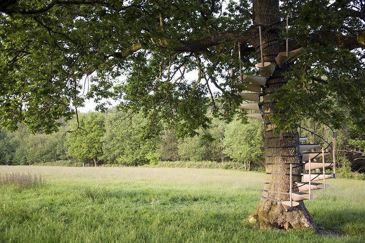 spiral staircase tree
