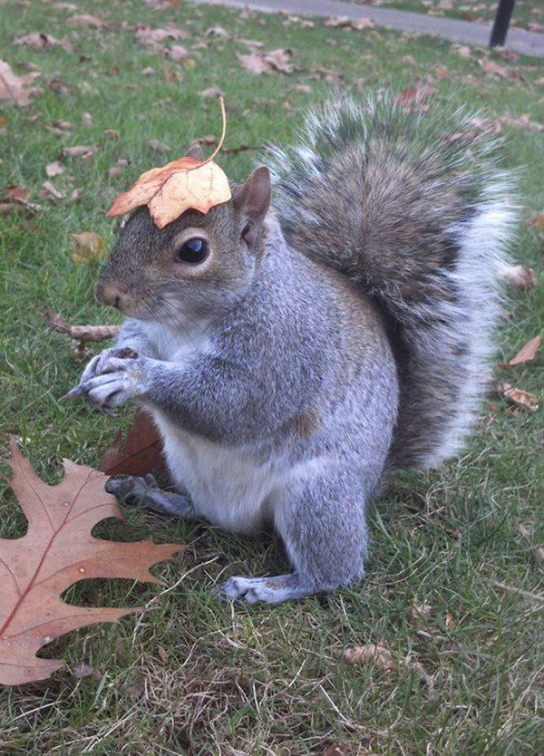 squirrel leaf head