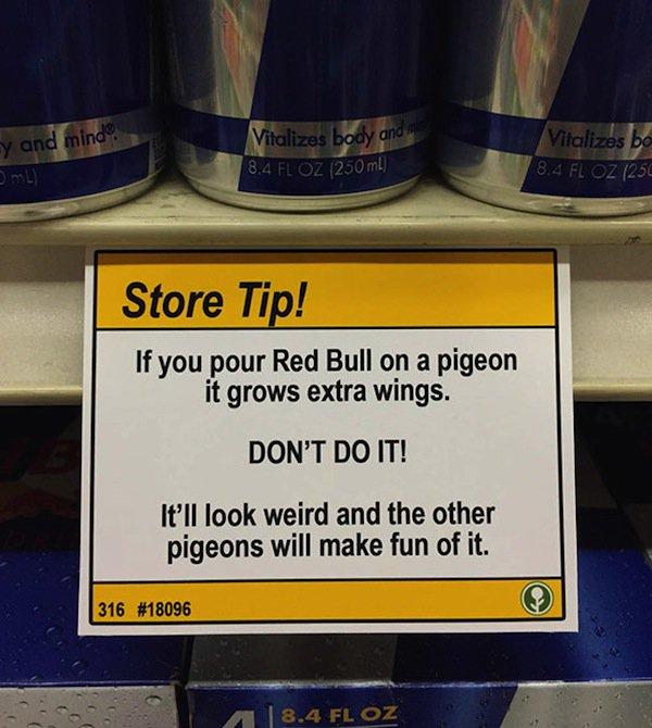 store-pigeon