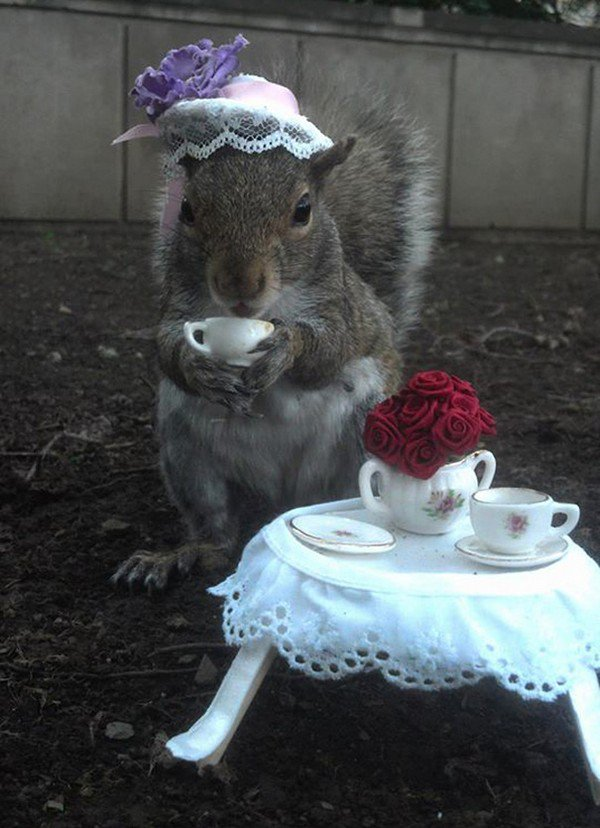 tea party squirrel