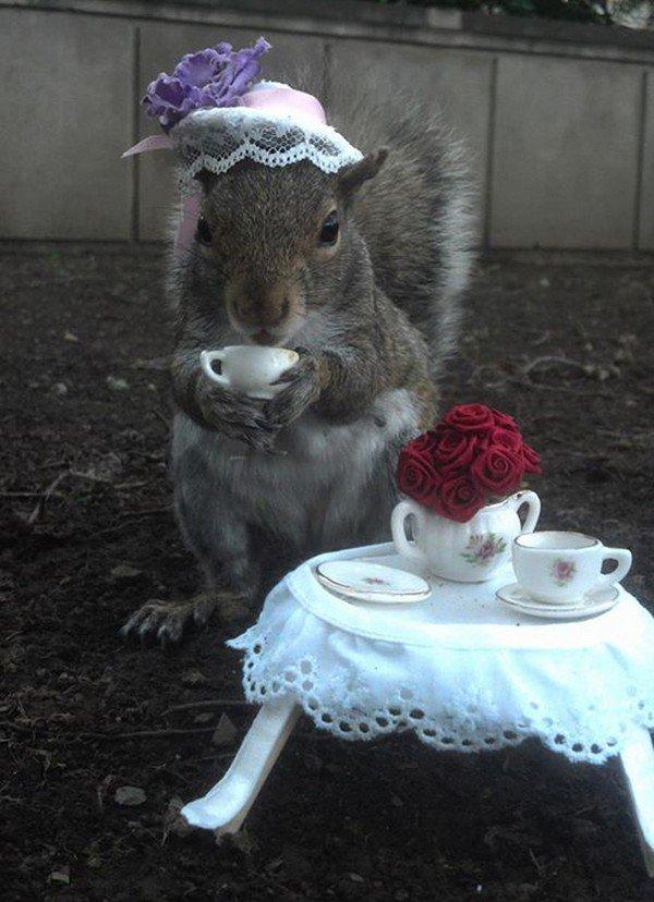 tea party squirrel