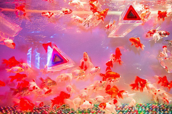 The Fish Tanks In This Tokyo Art Aquarium Are Beyond Awesome
