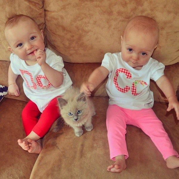 twins-kitty