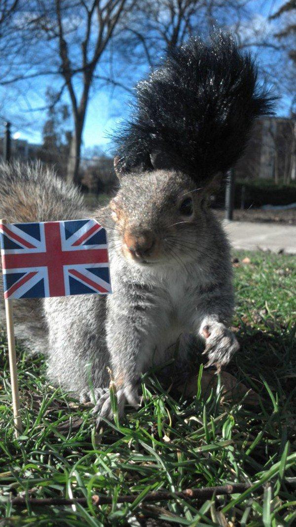 uk squirrel