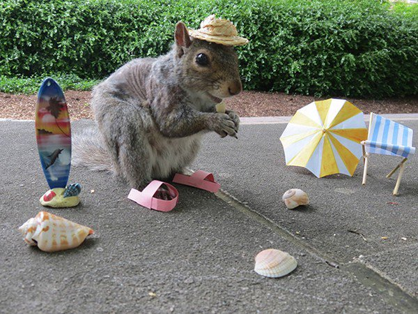 vacation squirrel
