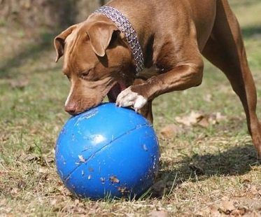 virtually indestructable dog ball