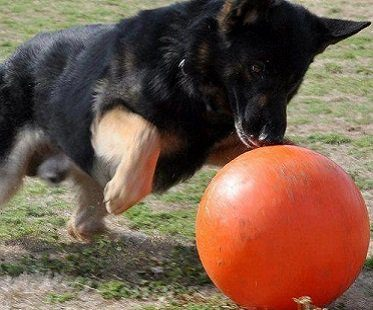 virtually indestructable dog ball red