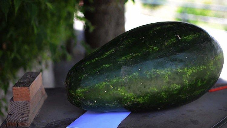 watermelon-start