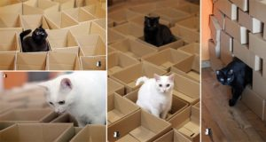 Cats Playing With Boxes