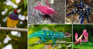 Colorful Animals That Are Real