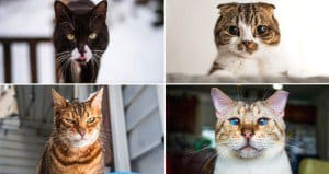 Emotion On Cats Faces