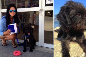 Girl Rescues The Stray Dog Who Saved Her From Being Attacked