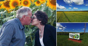 Husband Plants Sunflowers To Honor Late Wife