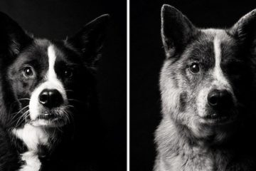 Images Of Dogs As They Grow Up
