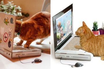 Laptop Scratching Post For Cats