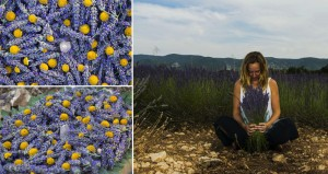 Lavender Art Which Helps Sustain Bee Population
