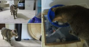 Man Builds Cat Feeding Machine