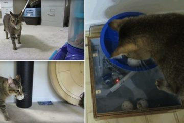 Man Builds Cat Feeding Machine