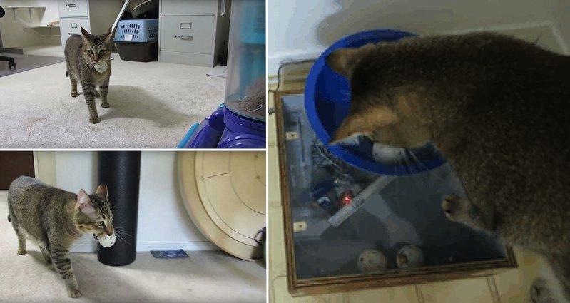 cat feeding machine