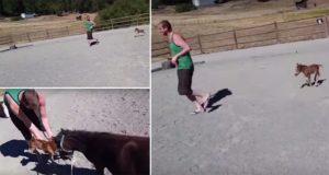 Miniature Horse Playing Chase