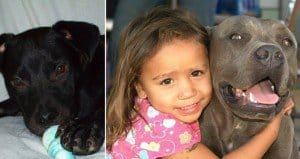 Surprising Dog And Little Girl