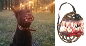 Werewolf Muzzles For Dogs