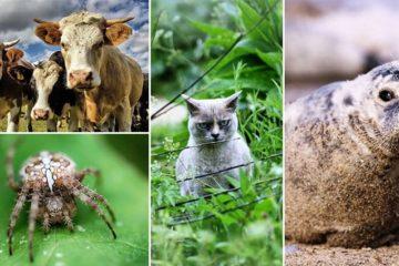 Wild Animals Staring At Photographer