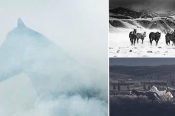 Wild Horses In North America