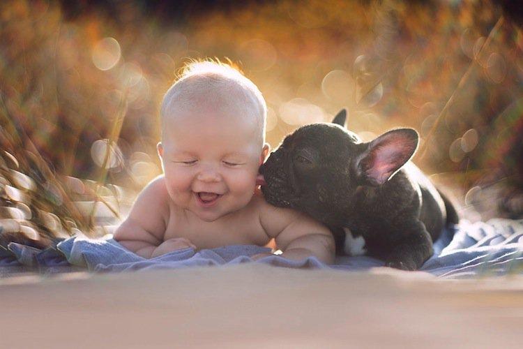 baby-bulldog
