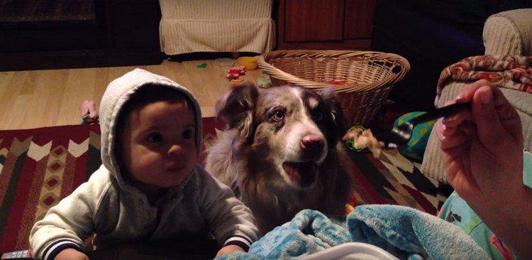 baby dog feeding