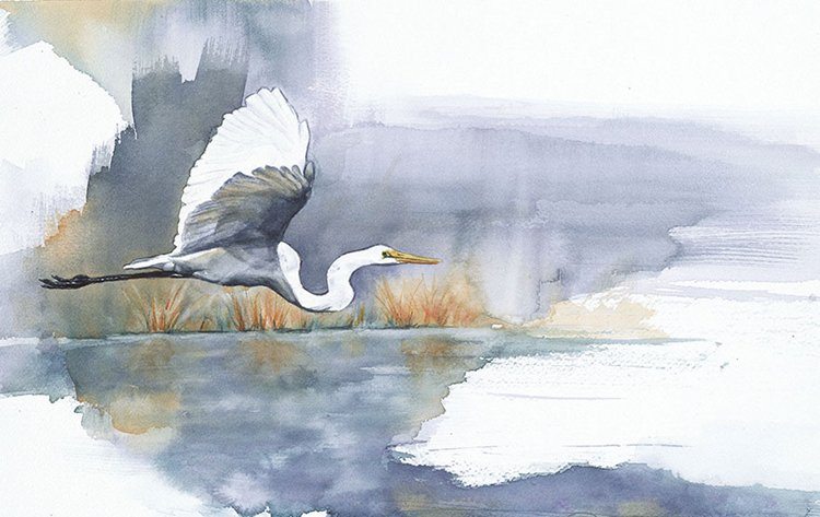 bird-watercolor-paintings-anne-balogh-egret