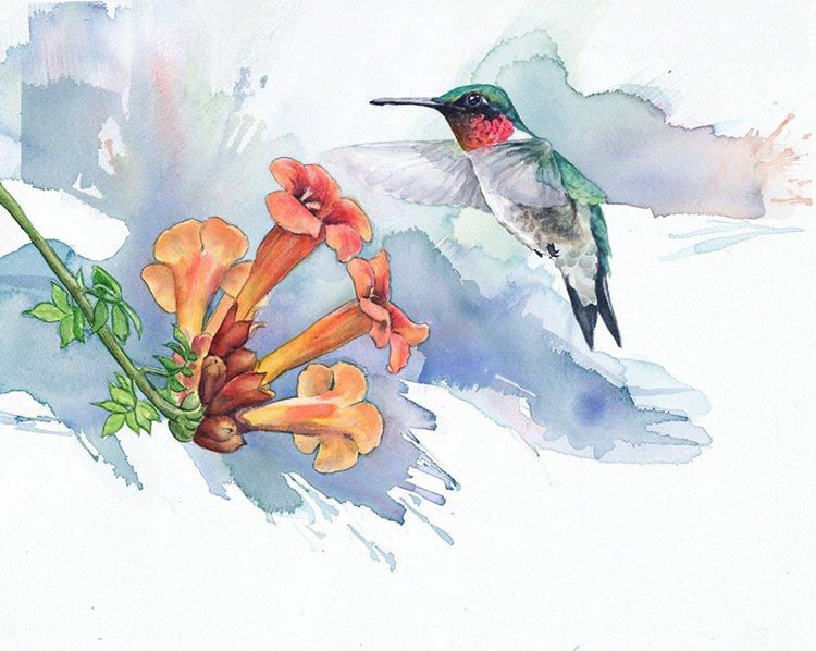 bird-watercolor-paintings-anne-balogh-hummingbird