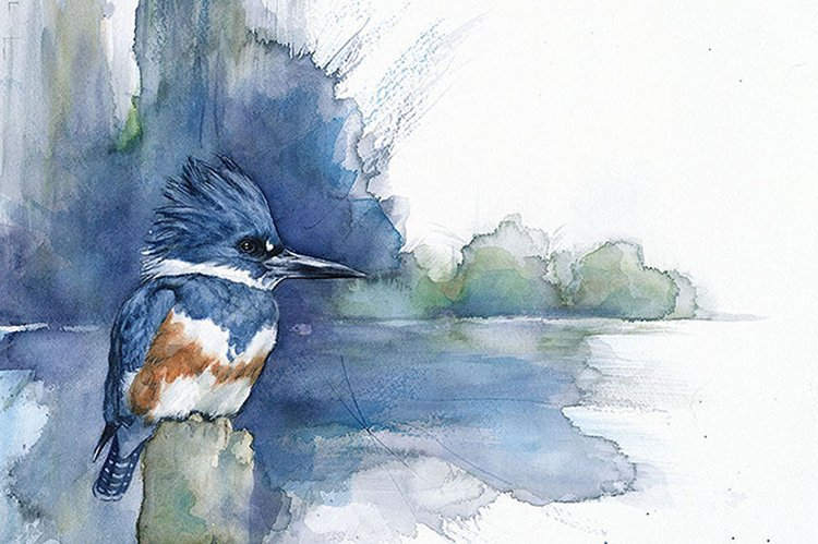 bird-watercolor-paintings-anne-balogh-kingfisher