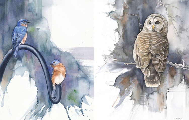bird-watercolor-paintings-anne-balogh-owl