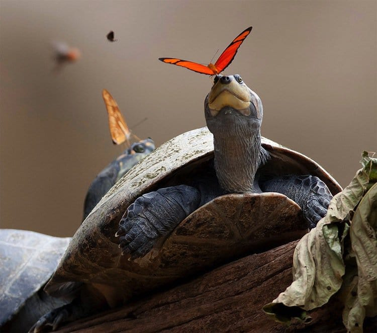 butterfly-turtle-two