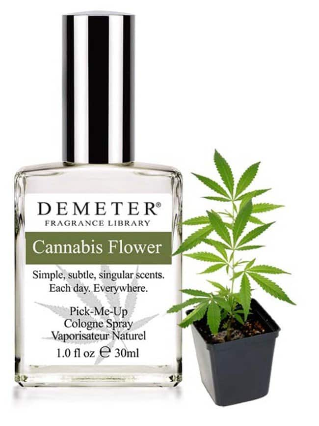 cannabis flower fragrance