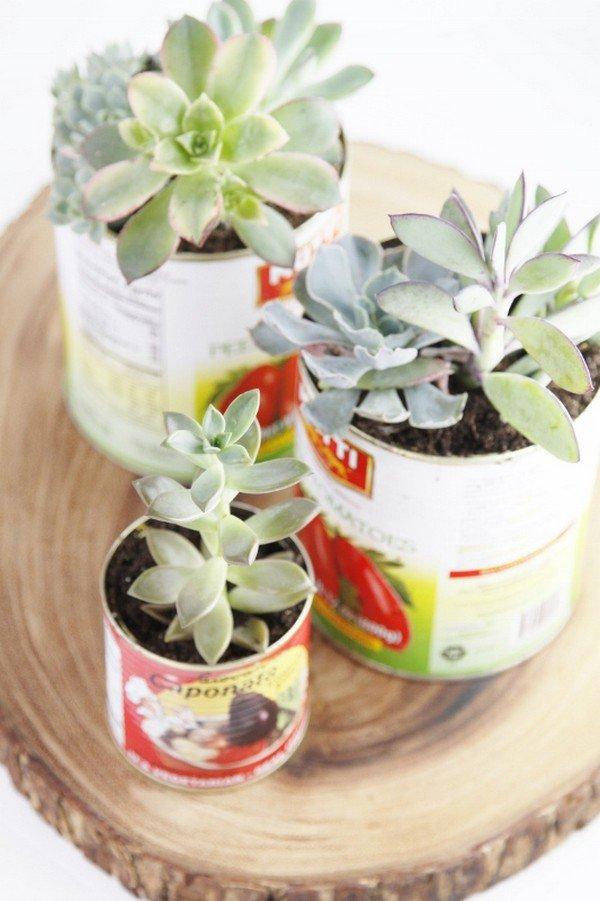 cans succulents